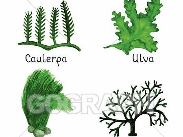Free download clip art. Algae clipart pond algae