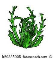 Algae clipart pondweed. Seaweed clip art illustrations
