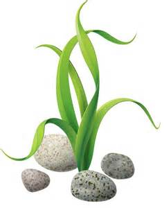The and stones under. Algae clipart pondweed