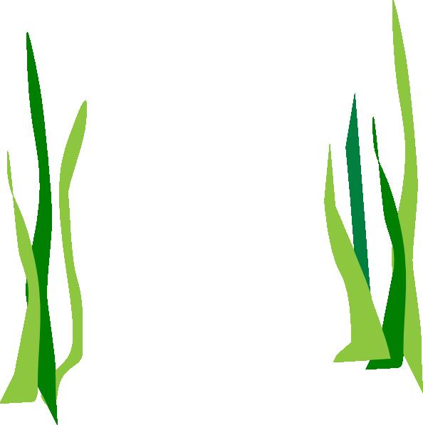 Green reeds clip art. Algae clipart pondweed