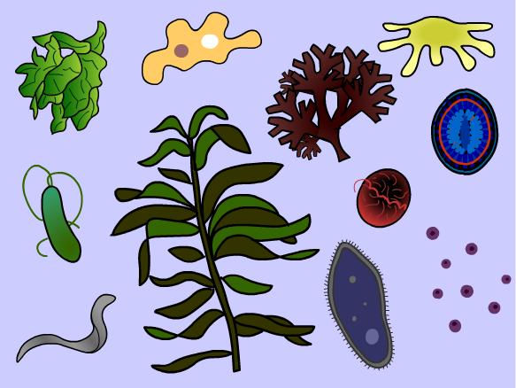 Algae clipart protist. Protists brainpop