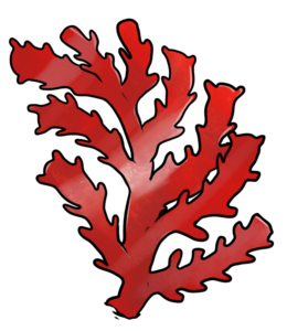 Lenallae got their homepage. Algae clipart red algae