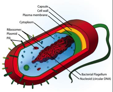 10.2 What are Algae? | EGEE 439: