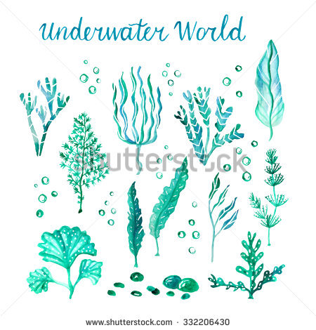 Algae clipart sea plant. Marine life pencil and