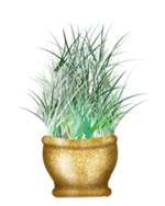 Algae clipart seagrass. Collections tasmen seaweed