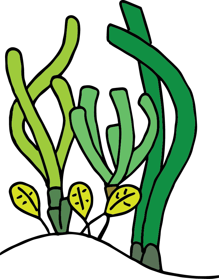 Peer reviewed articles ecology. Algae clipart seagrass