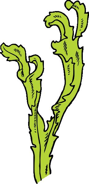 Sea weed clip art. Algae clipart seagrass