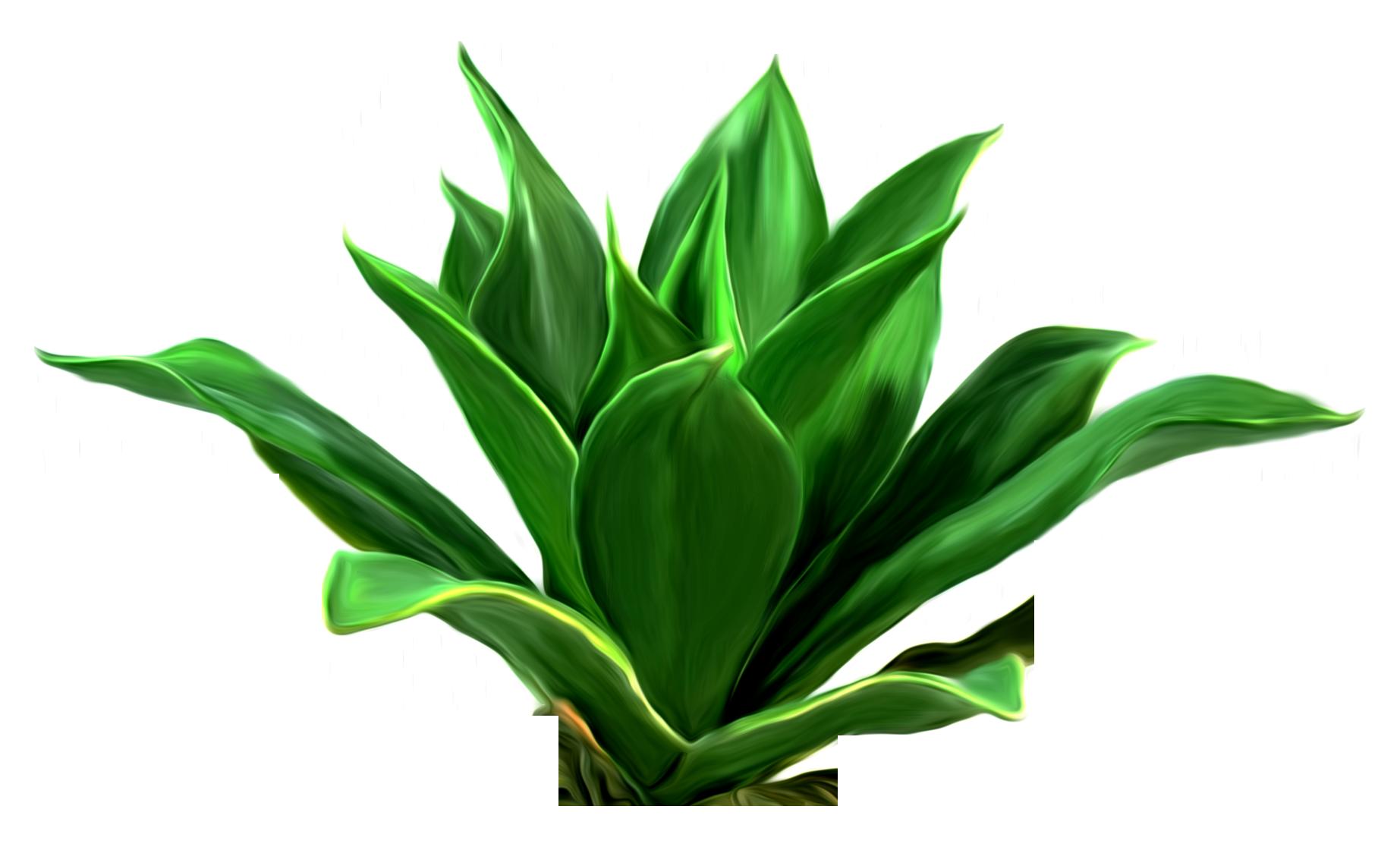 Algae clipart seagrass. Leaf download clip art