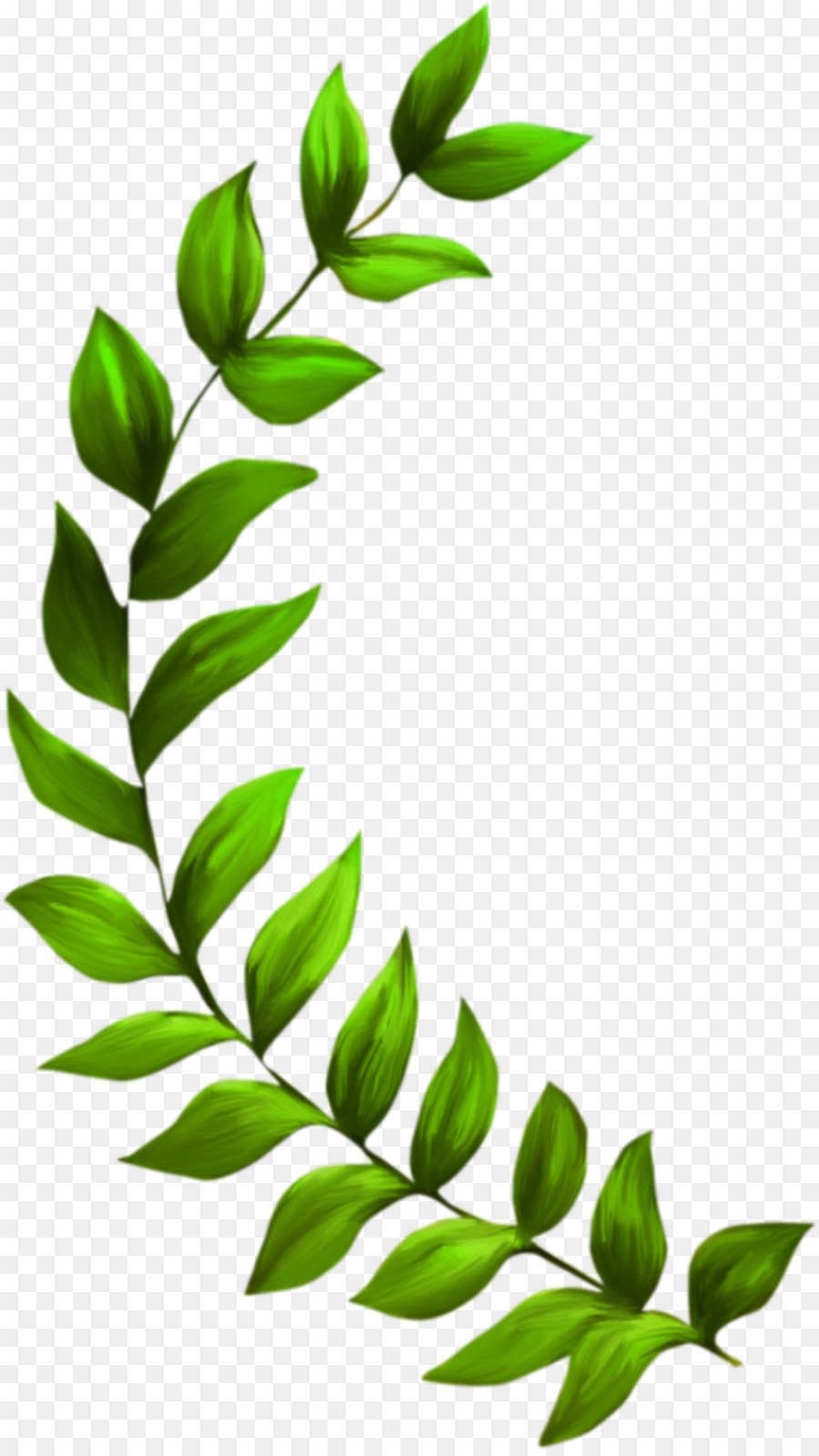 Algae clipart seagrass. Plant seaweed clip art