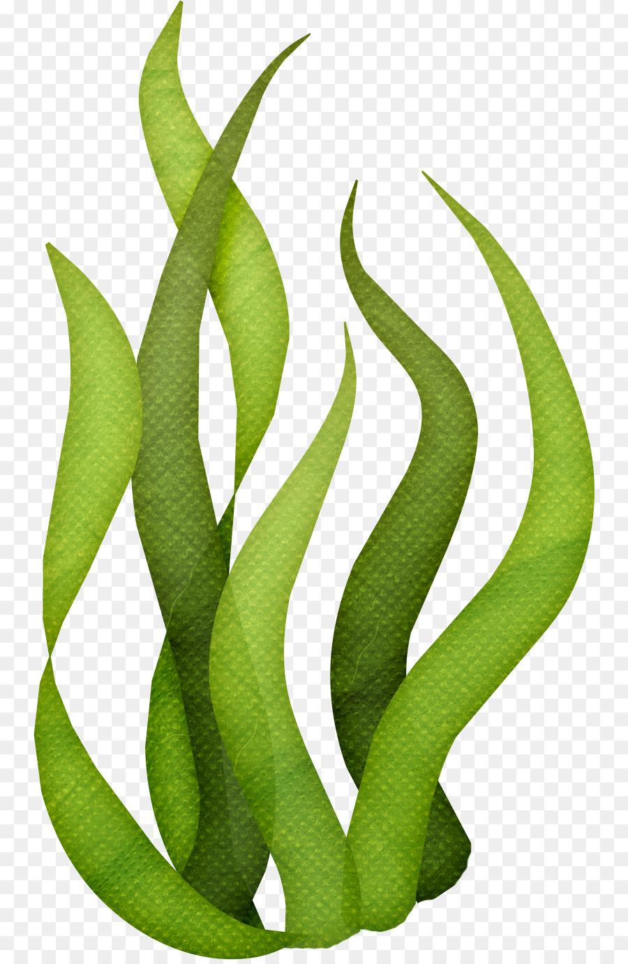 Seaweed Algae Clip art