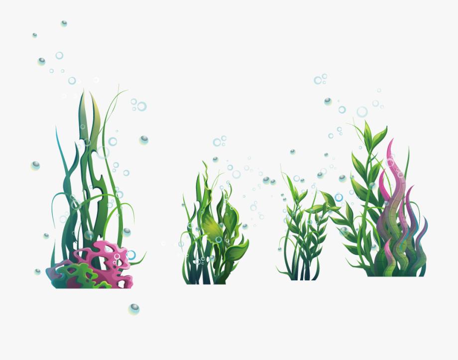 Algae clipart seaweed. Ocean marine png free
