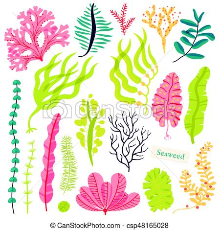 Algae clipart sketch. Drawing at getdrawings com