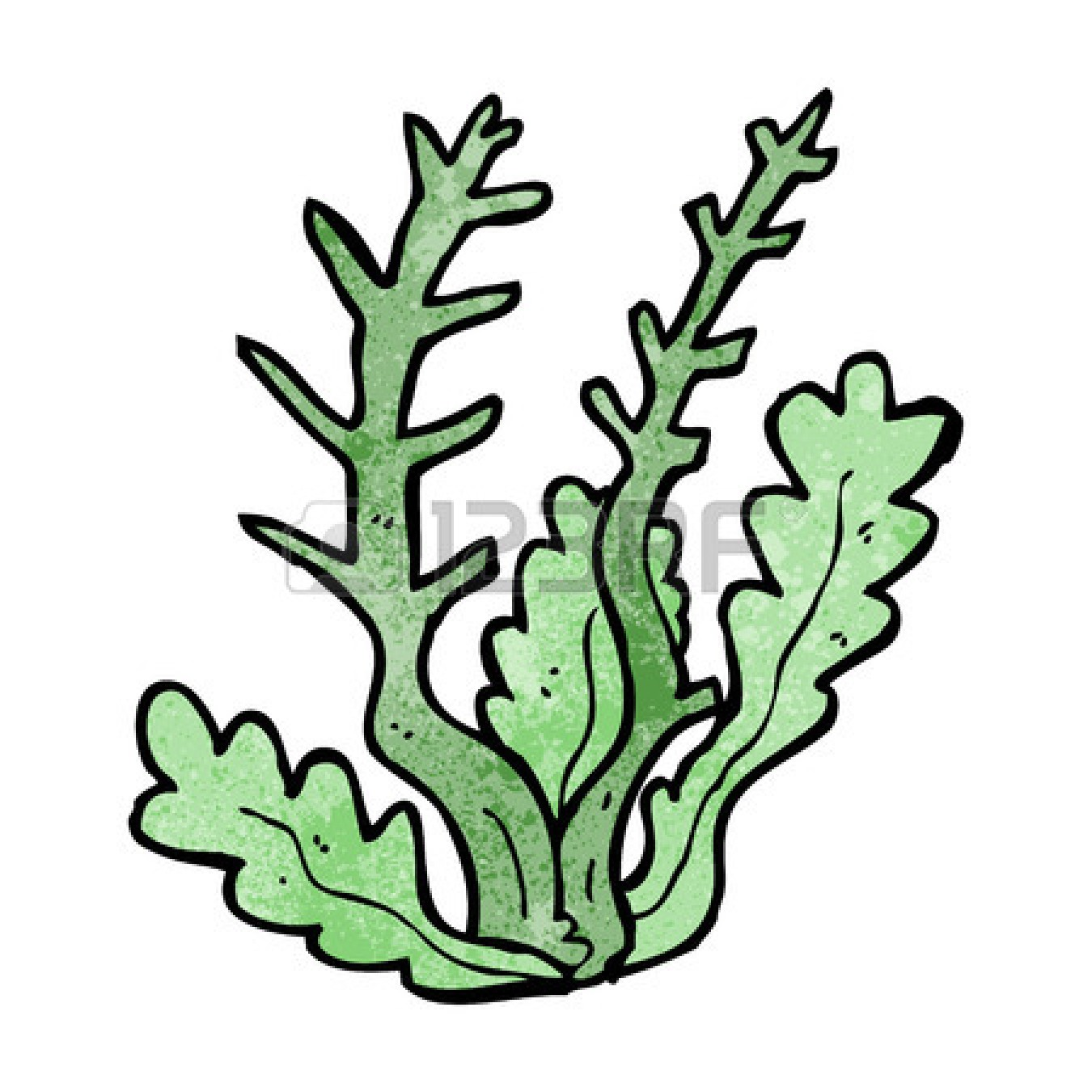 Coral sea pencil and. Algae clipart sketch