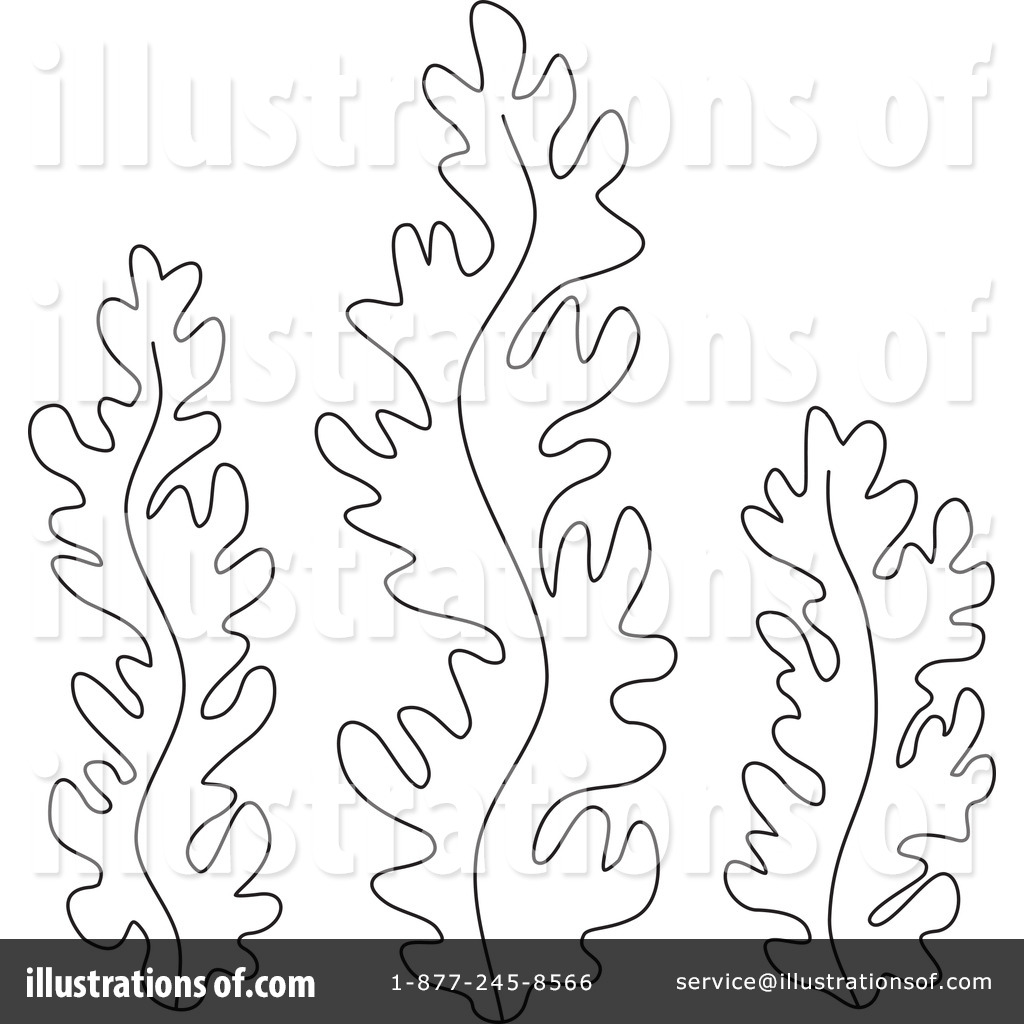 Red drawing at getdrawings. Algae clipart sketch