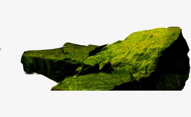 Pond landscape green moss. Algae clipart stone
