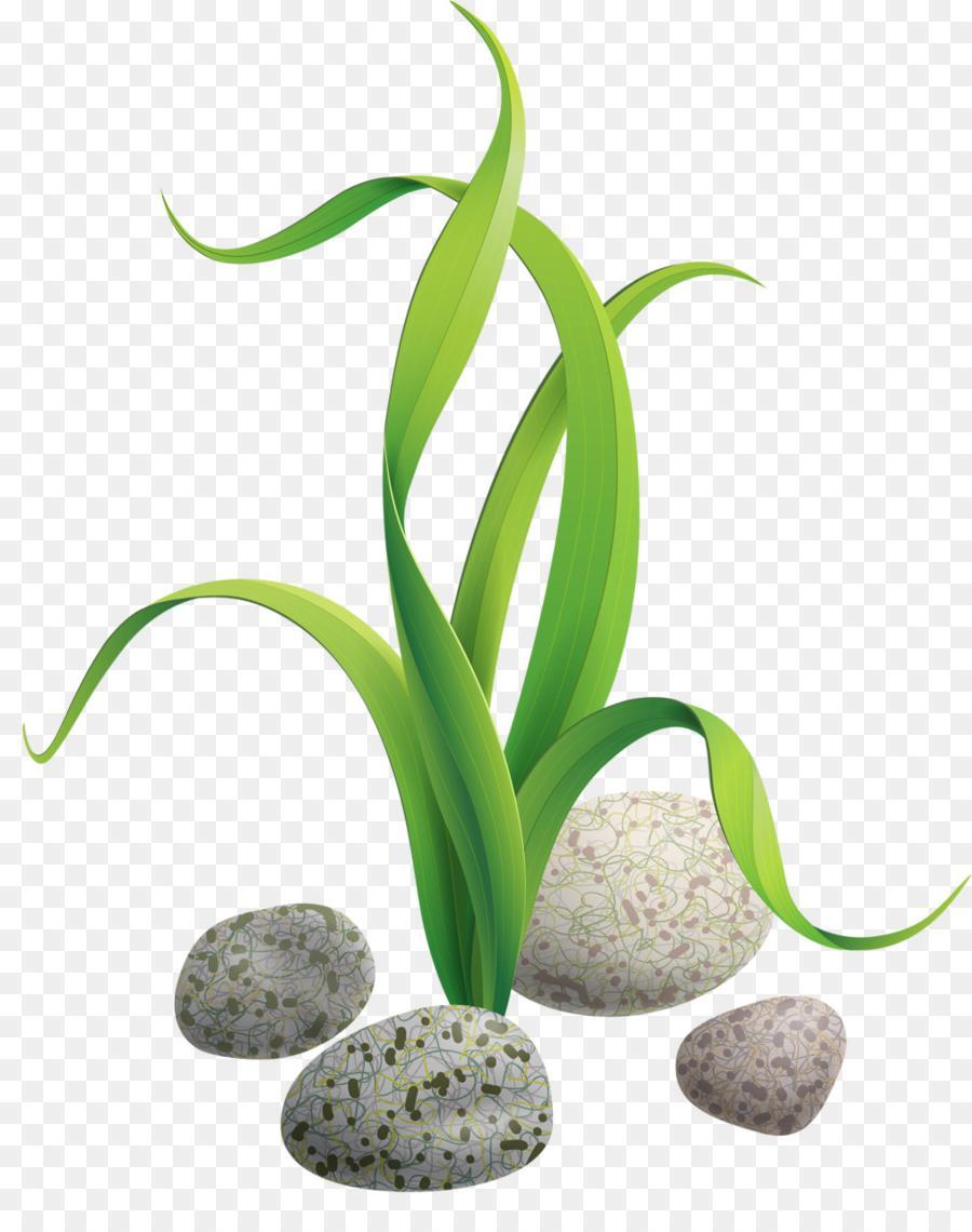 Best Free Kiss Algae Seaweed Clip Art Stones And Rocks Design
