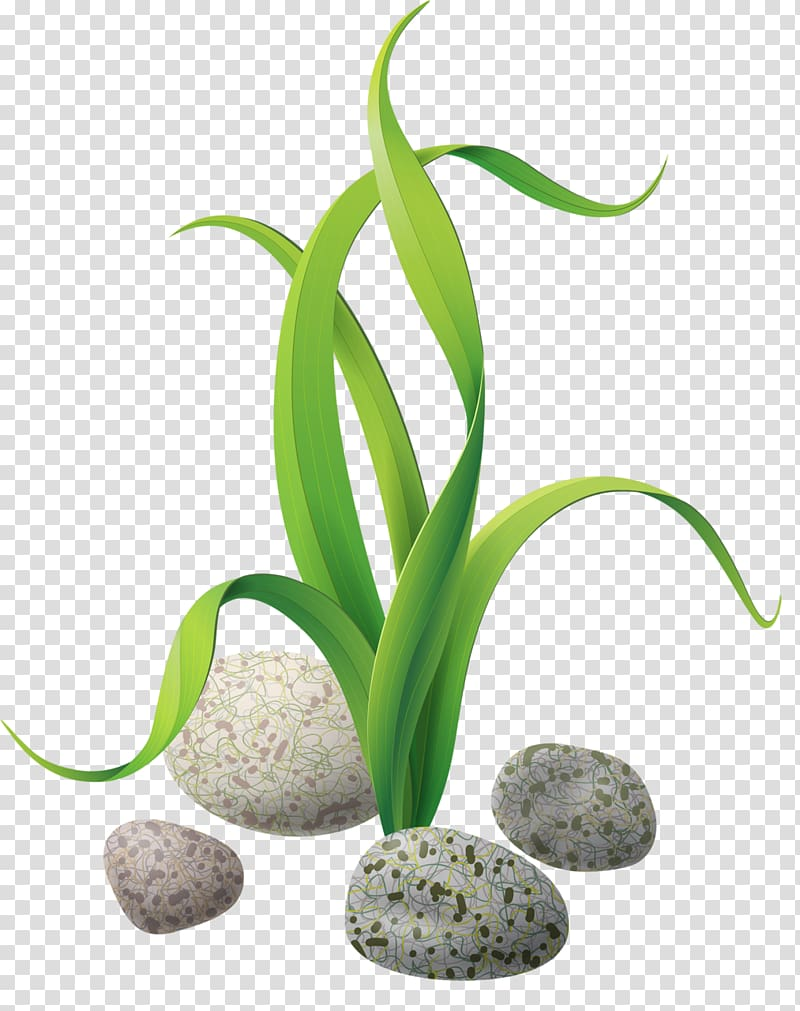 Green leafed plant graphic. Algae clipart stone