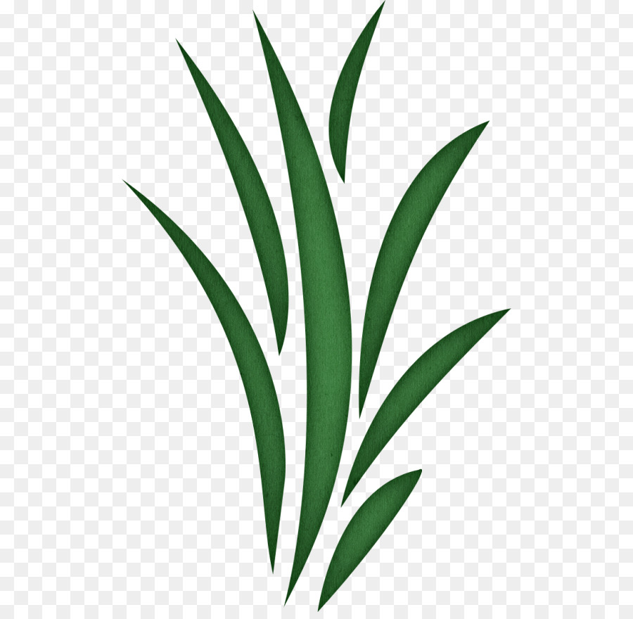 Clip art cliparts png. Clipart grass seaweed