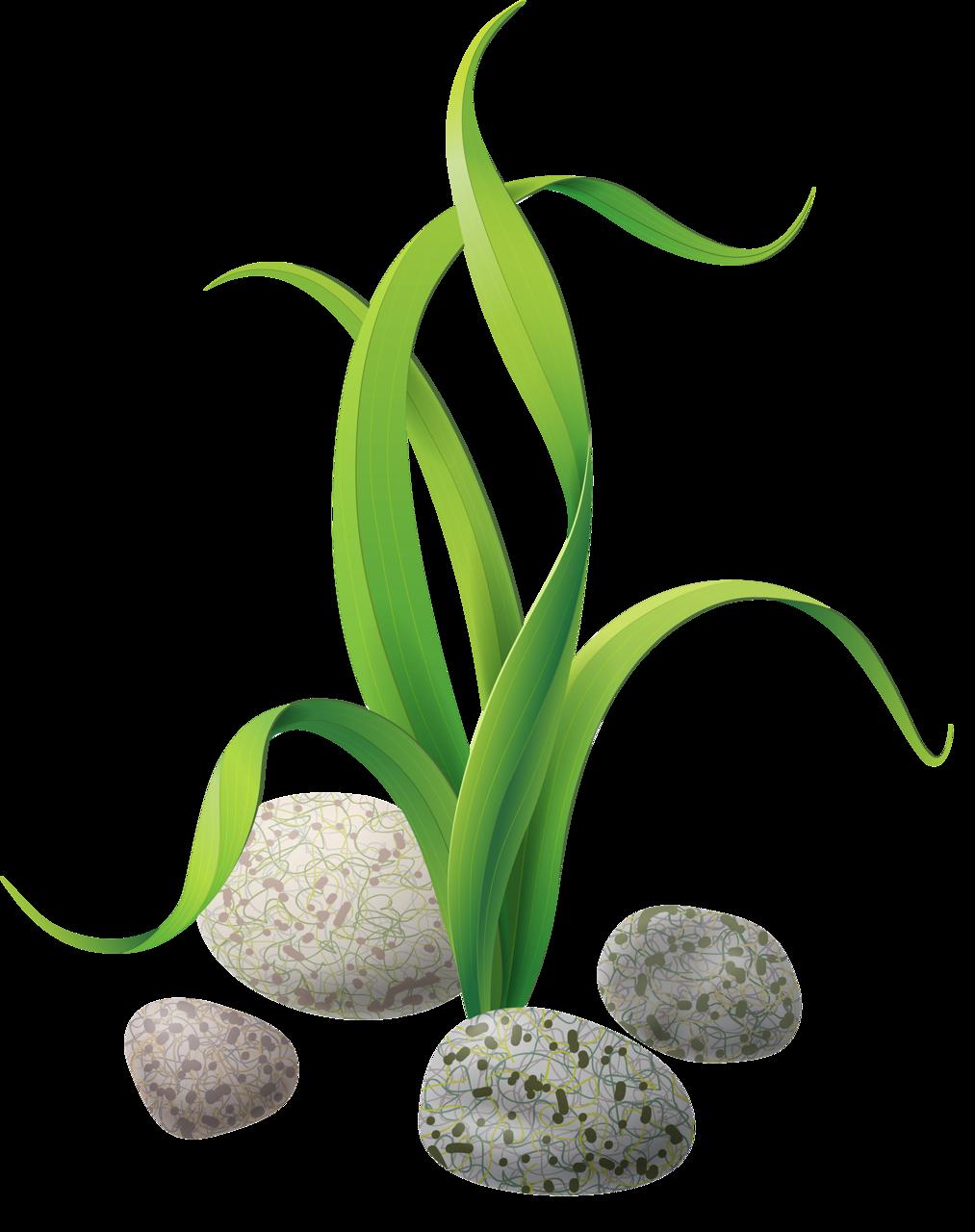 Seaweed clip art stones. Algae clipart transparent background