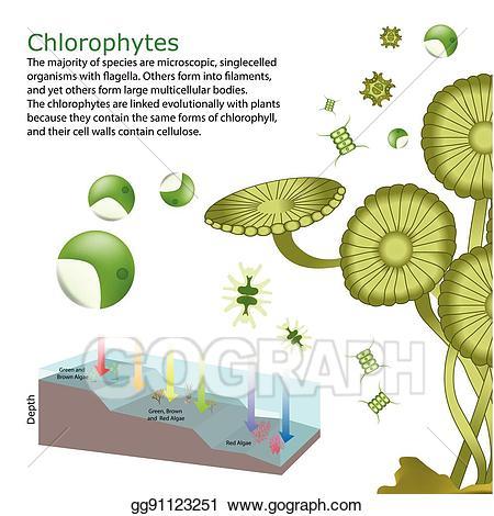 Eps vector underwater seaweed. Algae clipart underwate