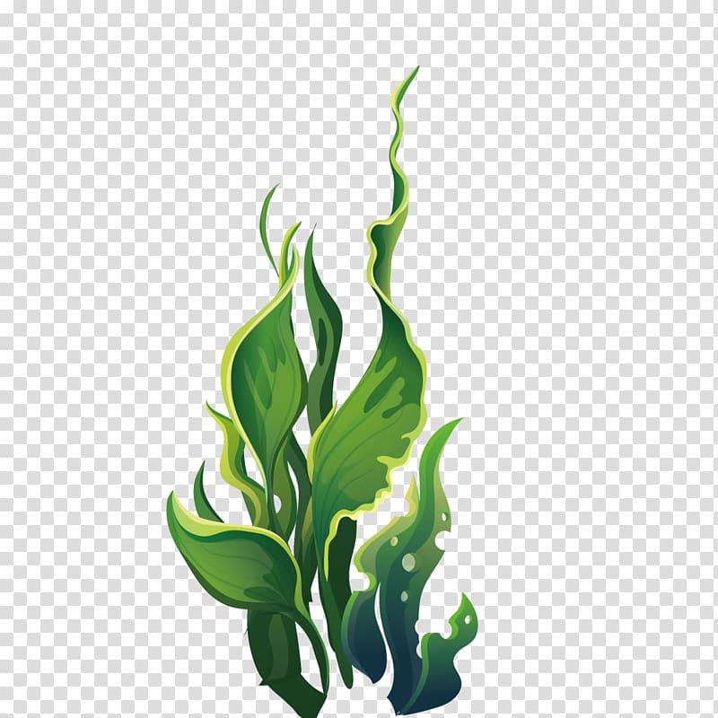 Linear leafed illustration aquatic. Algae clipart underwater plant