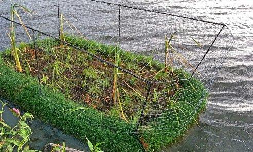 Algae clipart wetland plant. Vita water technologies biohaven