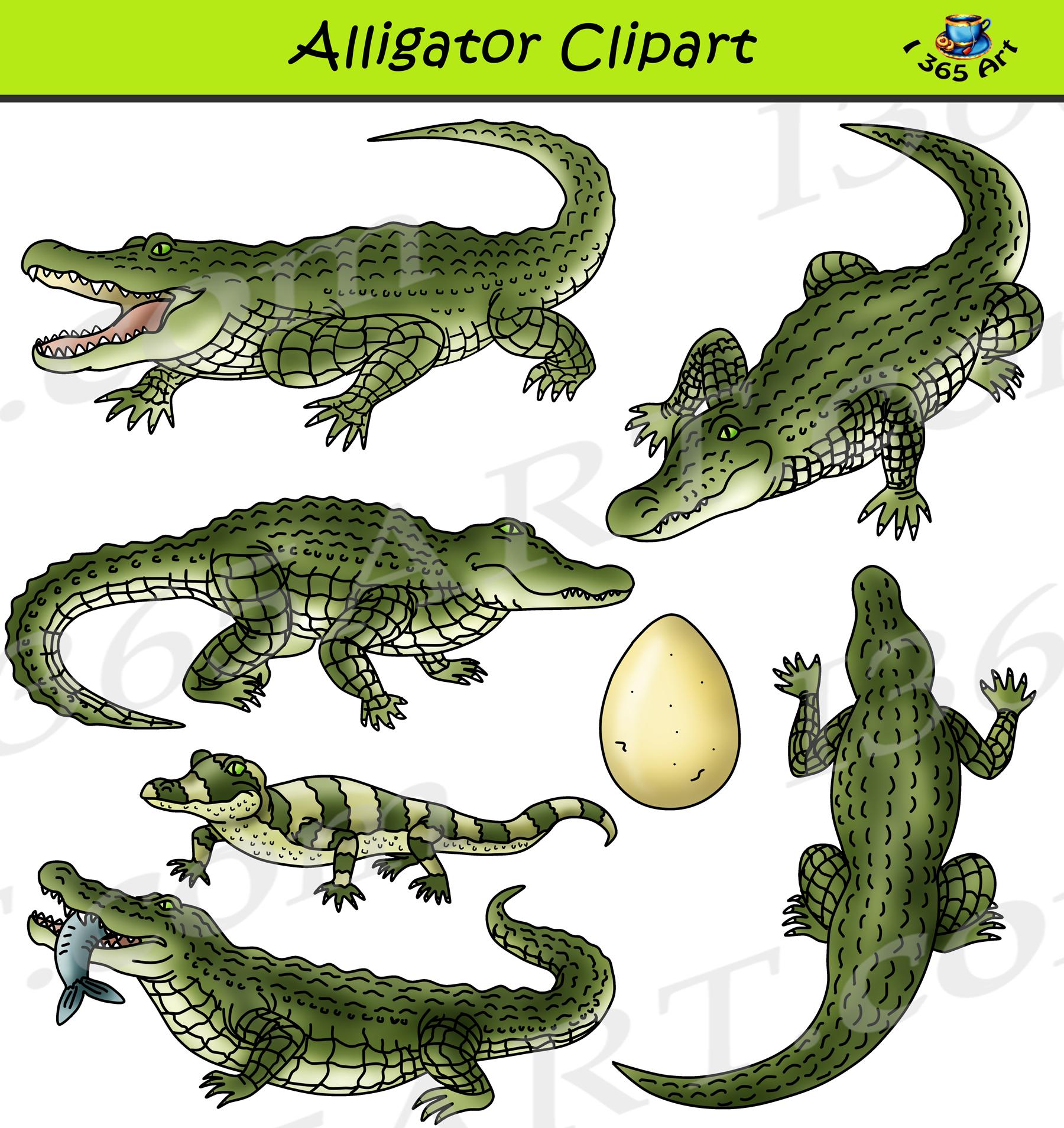 Gator clipart realistic. Alligator set graphics download