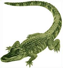 Alligator clipart american alligator. Free there are only