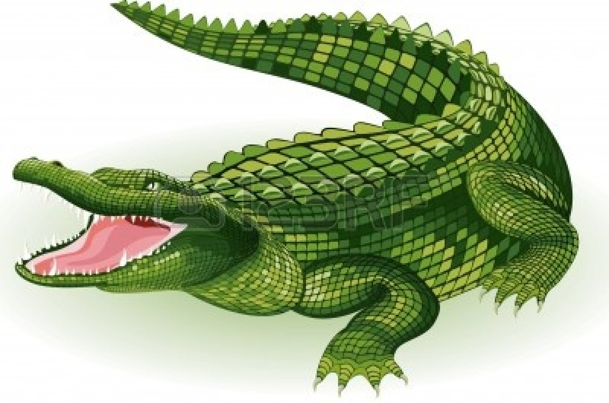 Crocodile clipart two. Collection of free alligator