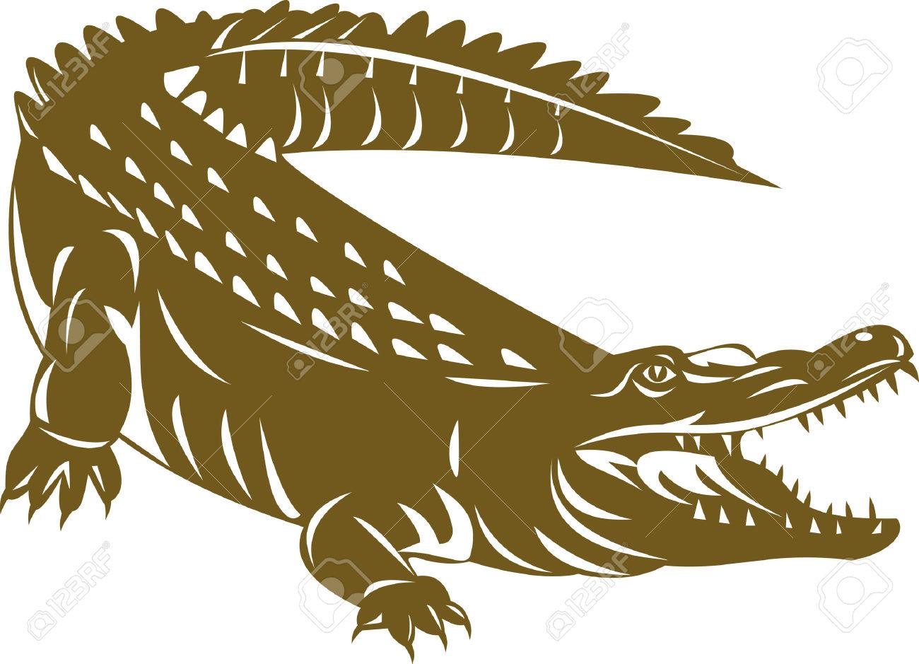 Brown explore pictures. Alligator clipart caiman