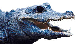Alligator clipart open mouth. Free gifs animated alligators