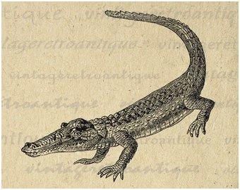 X free clip art. Alligator clipart printable