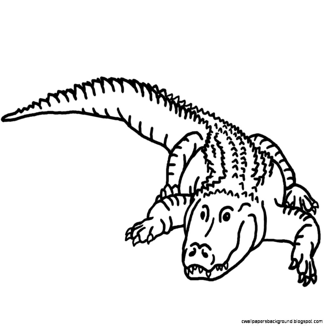 Alligator clipart printable. Line drawing at getdrawings
