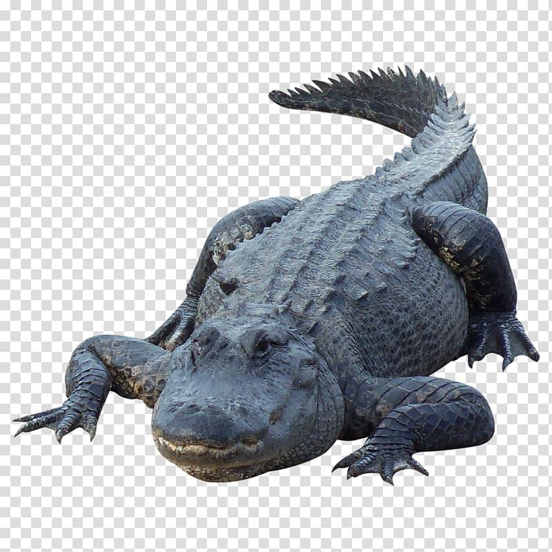 Alligator clipart saltwater crocodile. Black transparent