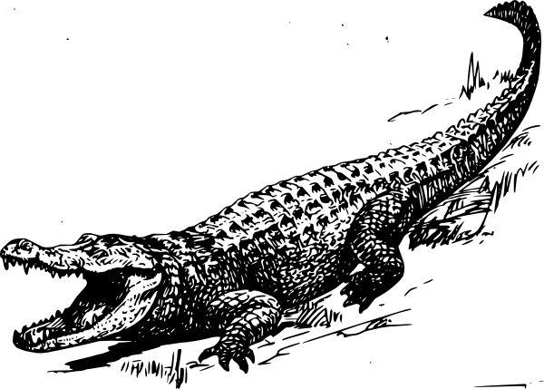 best tattoo outline. Alligator clipart saltwater crocodile