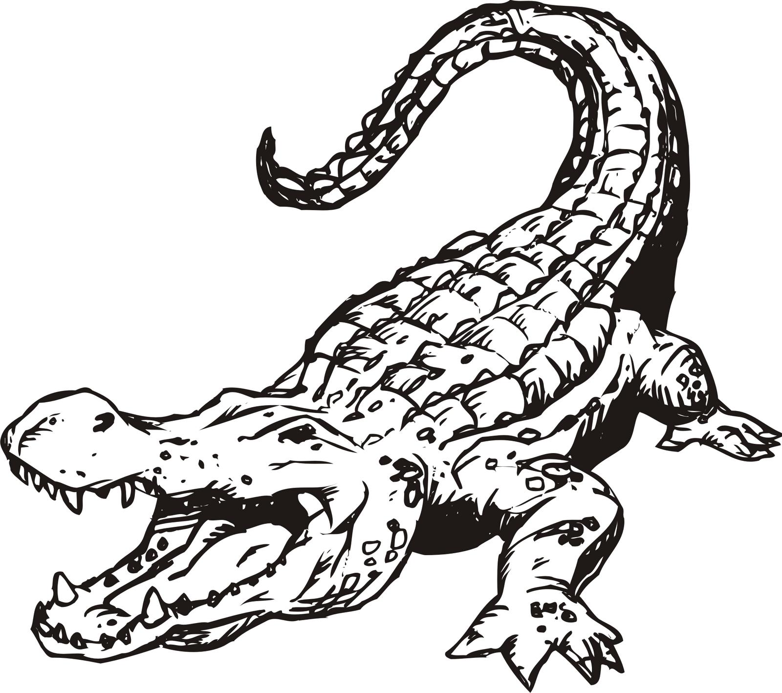Clip art free best. Alligator clipart saltwater crocodile