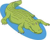 Alligator clipart swimming. Search results for reptile