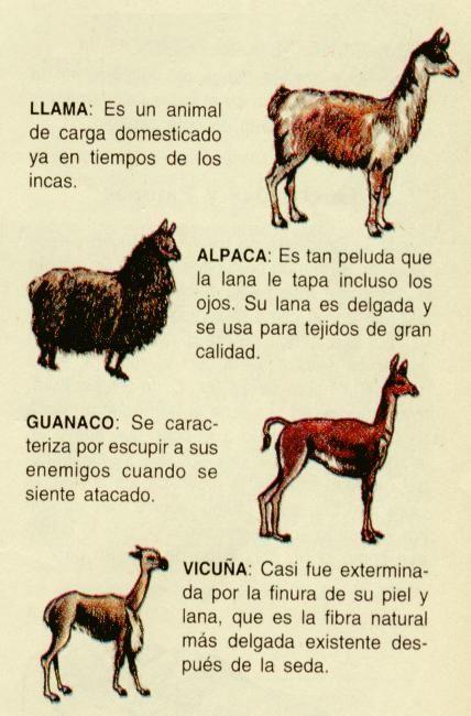 Alpaca clipart ancient inca. Llama vs vicuna animales