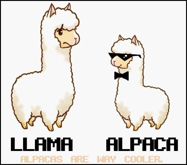 Alpaca clipart cute anime. Cartoon vs llama free