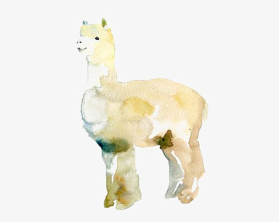 Hand painted lamb png. Alpaca clipart drawing