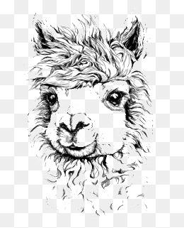 Alpaca clipart drawing. Illustrator png vectors psd