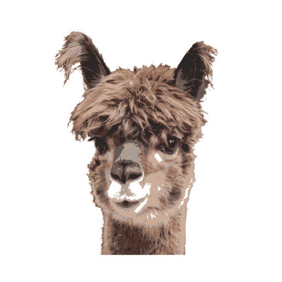 Alpaca head