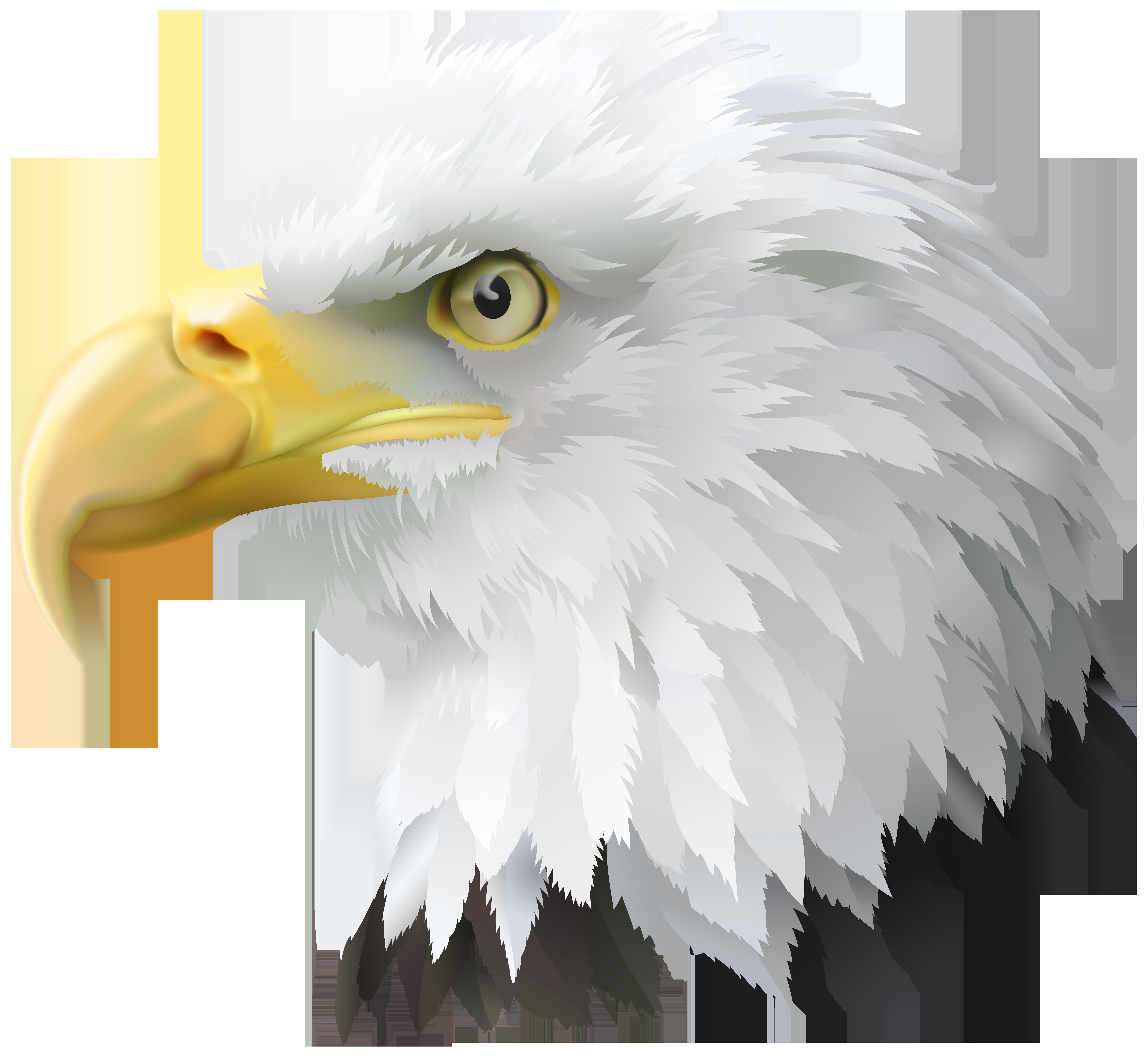 American eagle transparent png. America clipart head