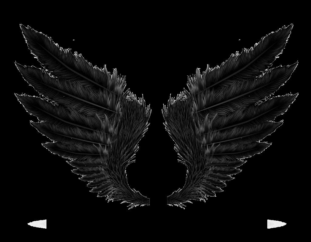 Angel wings vector png. Black transparent image peoplepng