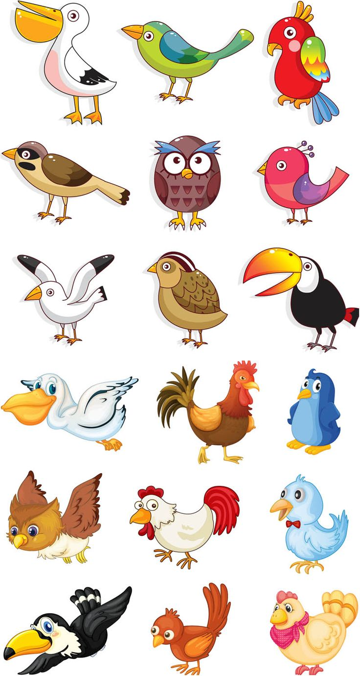 Birds clipart name, Birds name Transparent FREE for download on