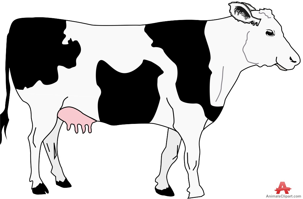 With black spots free. Animals clipart cow