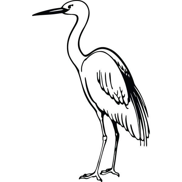 Free download best on. Animals clipart crane