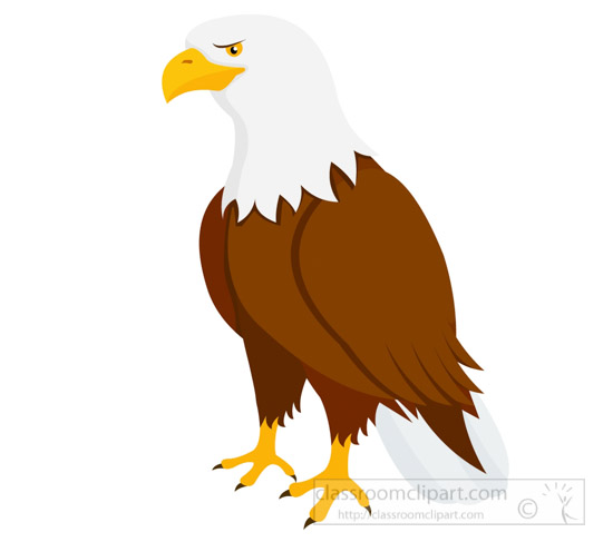 Animals clipart eagle. Animal bird bald classroom