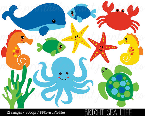 Animals clipart ocean. Sea animal under the