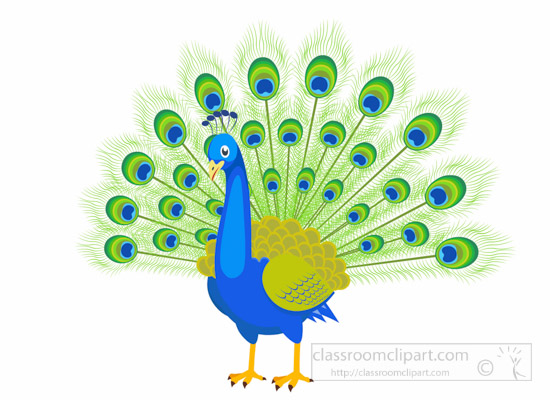 Animals clipart peacock. Free animal bird with
